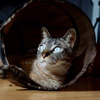 Chat au sol regardant à travers son tunnel