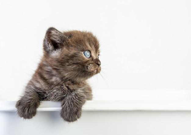 Chat bébé tabby chaton mignon