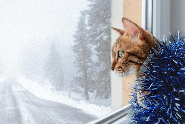 Chat bengal en guirlandes de noël se trouve près de la fenêtre.