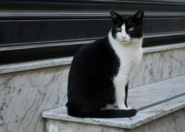 Chat bicolore assis sur une marche en marbre