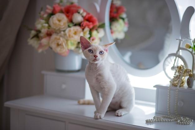 Chat blanc aux yeux bleus assis sur la table de toilette dans la chambre