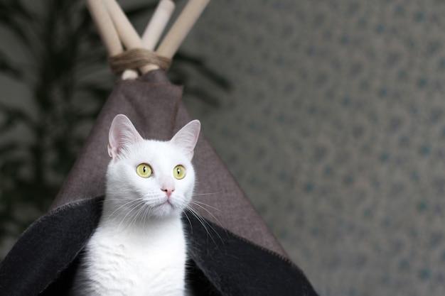 Un chat blanc aux yeux jaunes est assis dans sa maison.