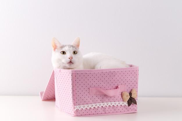 Chat blanc dans la boîte de starage