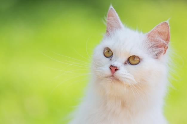 Chat blanc dans le jardin