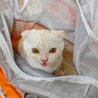 Chat blanc dans un sac en plastique