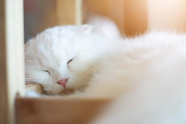 Chat blanc dort avec la lumière du soleil