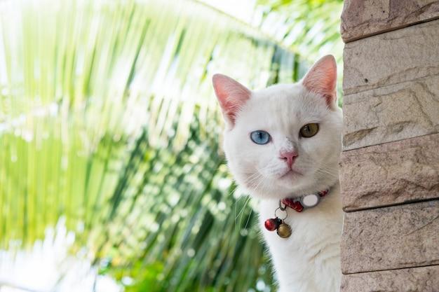 Chat blanc à l'extérieur