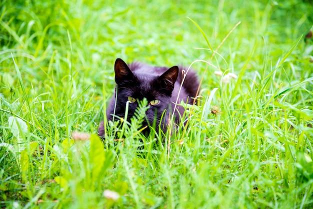 Chat blanc furtivement à travers le sous-bois