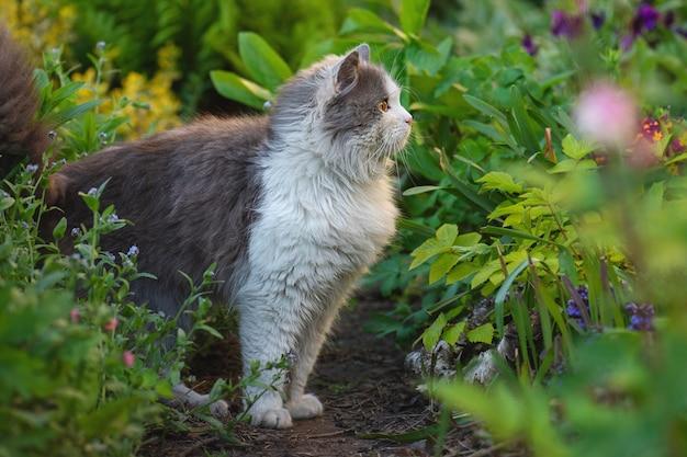 Chat blanc et gris entouré de plantes.