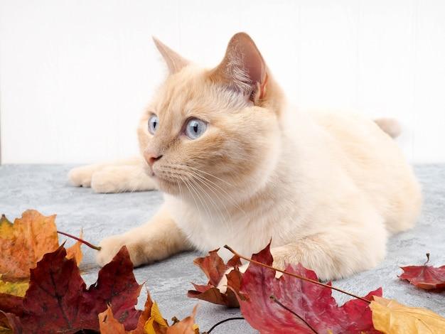 Chat blanc jouant avec les feuilles d'automne