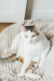 Chat blanc lèche sur le lit
