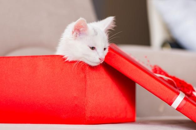 Chat blanc présent dans la boîte rouge