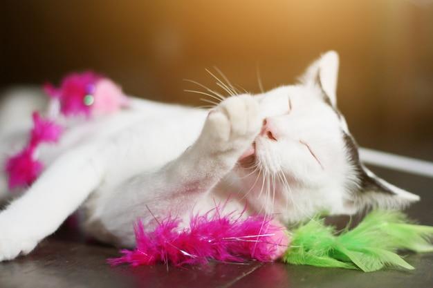 Chat blanc profiter et se détendre sur le plancher en bois