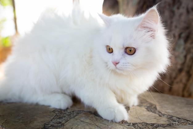 Chat blanc sur le sol, chat mignon.