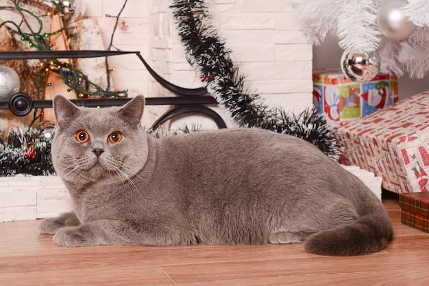 Chat british shorthair à côté de la cheminée et de l'arbre de noël.