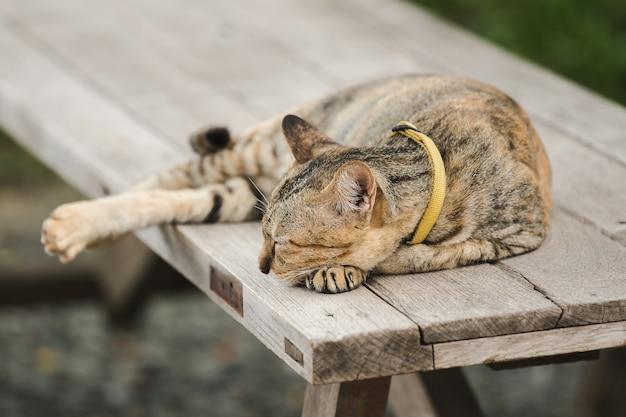 Chat brun allongé sur une vieille chaise en bois