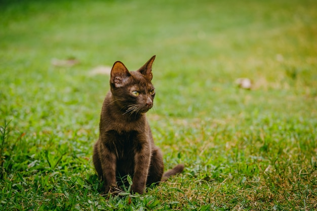 Chat brun assis sur l'herbe dans le jardin avec la lumière du soleil