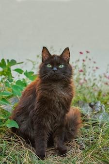 Chat brun foncé assis entouré de plantes.