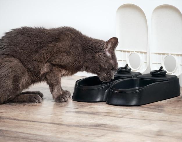 Chat brun mange du chargeur automatique