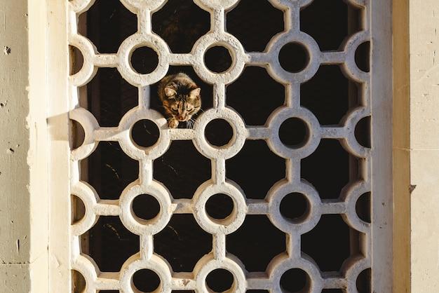 Chat brun en regardant depuis les trous d'un mur avec des formes géométriques.