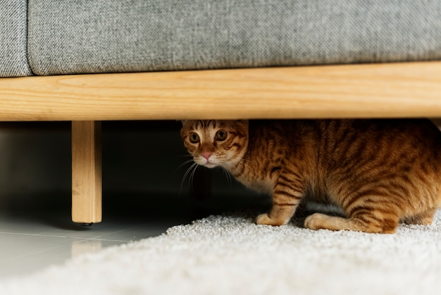 Un chat caché sous un canapé