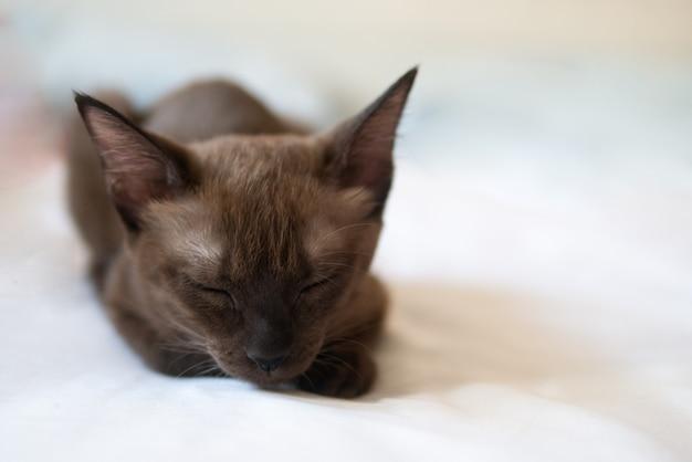 Chat chaton brun chocolat dort sur le concept de relaxation de lit blanc
