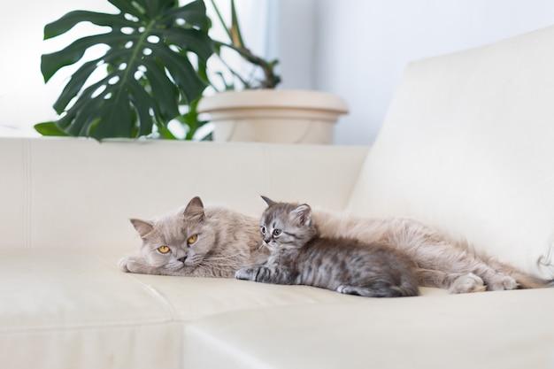 Le chat avec le chaton est allongé sur le canapé.