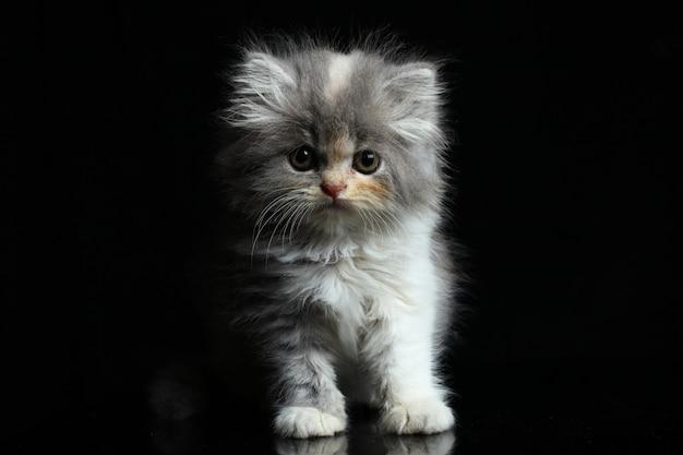 Chat chaton isolé sur fond noir