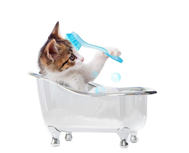 Chat chiot dans la baignoire