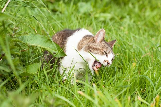 Chat en colère dans l'herbe verte