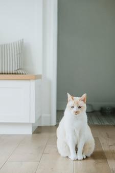 Chat de compagnie assis sur le plancher de bois franc