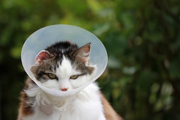 Chat avec cône