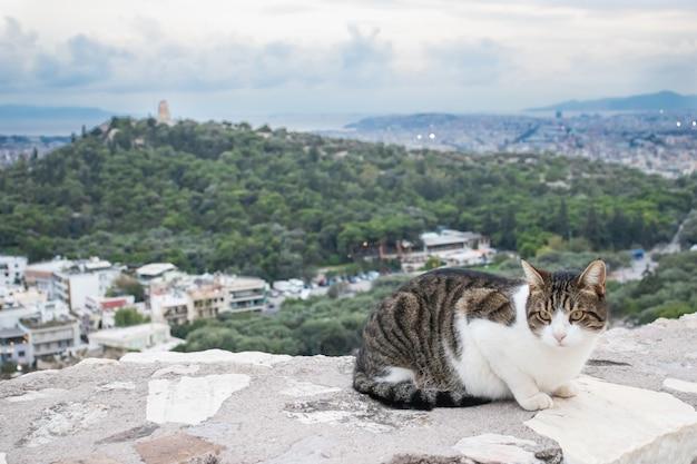 Chat contre la vue sur la ville du parthénon à athènes, grèce