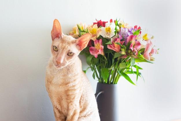 Chat de cornouailles beige avec un bouquet de fleurs dans un vase sur une table en bois