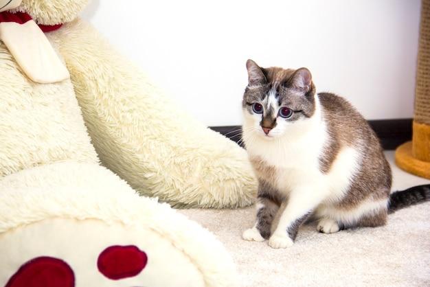 Un chat à côté d'une peluche. un chat dans un intérieur lumineux.