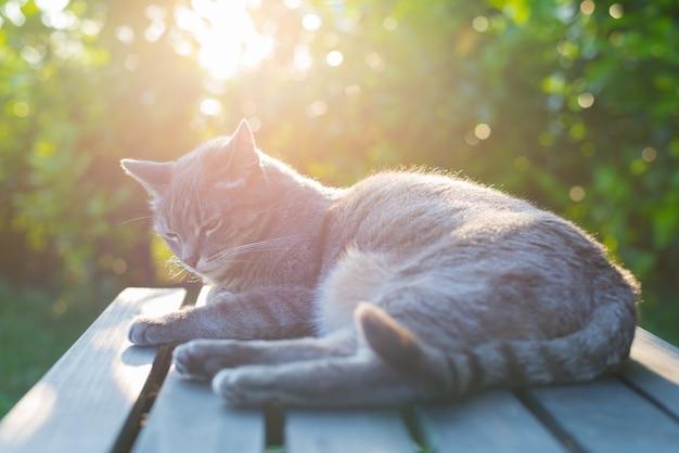 Chat couché sur un banc