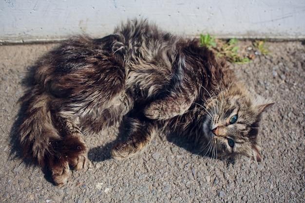 Chat couché sur le dos profiter du soleil dans le parc