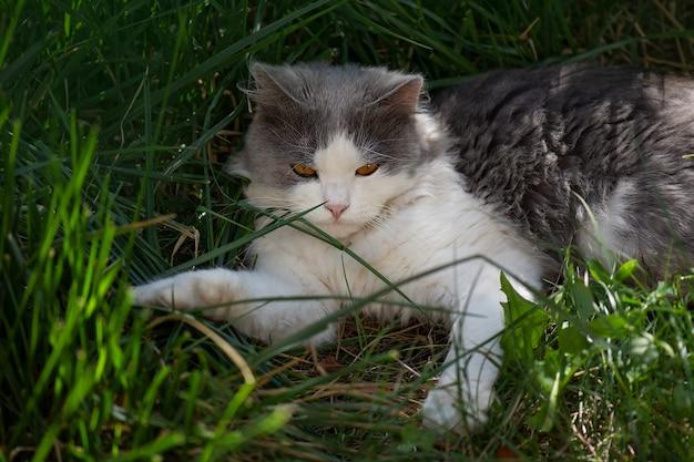 Chat couché à travers un patch de fleurs. le chat est allongé dans le jardin.