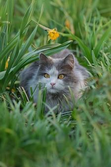Chat couché à travers un patch de fleurs