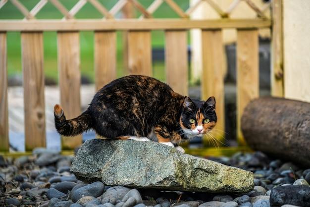 Chat de couleur noir et marron à l'extérieur de la maison.