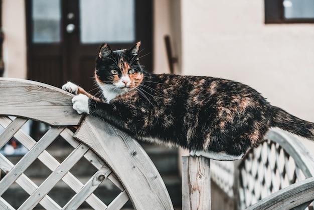 Chat de couleur noir et marron à l'extérieur de la maison