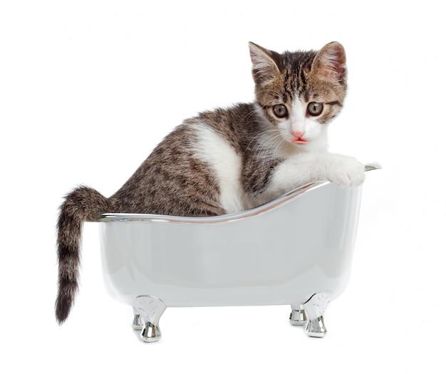 Chat dans la baignoire