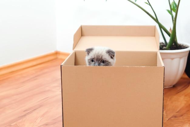 Chat dans une boîte dans une nouvelle maison. trucs ménagers emballés pour emménager dans une nouvelle maison.