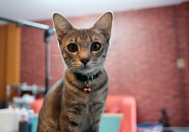 Chat dans la chambre
