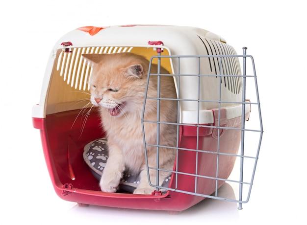 Chat dans un chenil