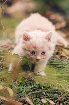 Chat dans le jardin d'automne