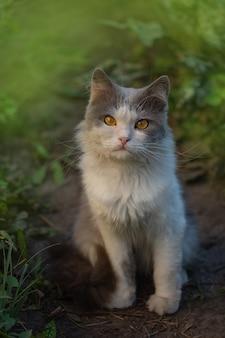 Chat dans un jardin coloré de printemps. le chat est assis dans un jardin d'été parmi les fleurs. fleurs et chat dans le jardin
