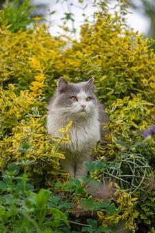 Chat dans un jardin coloré de printemps par une belle journée de printemps. chaton assis dans les fleurs. le chat est assis dans le jardin de pelouse verte. le chat est assis dans le jardin