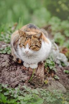 Chat dans le jardin d'été