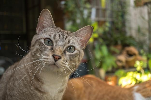 Le chat dans le jardin lève les yeux.